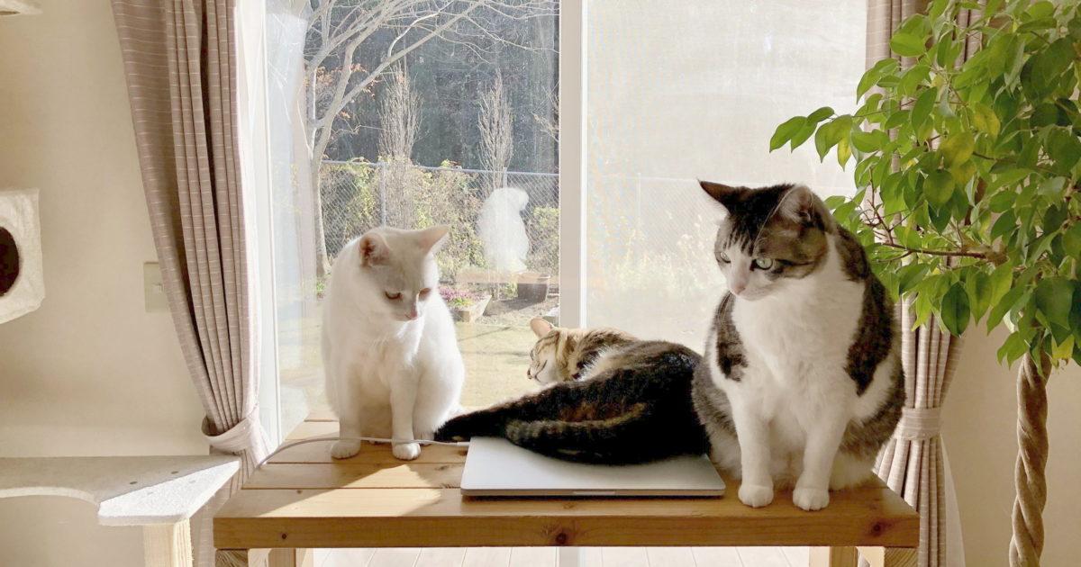スタンディングデスクの上の3猫