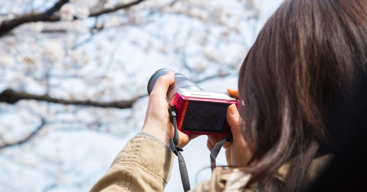 桜をミラーレスカメラで撮影する女性